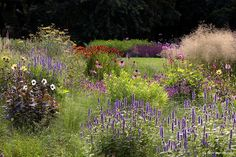 Join us for outdoor adventures Plant Design, Garden Design, Garden Landscaping, Perennials, Wild Flowers, Home And Garden, Museum, Seasons, Landscape