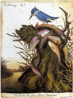 thejeweledotter:  Ornithomancy No.3 by Walton Ford