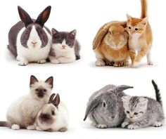 cats&bunnies