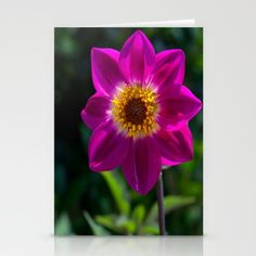 Pink Dahlia Stationery Cards