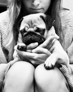 Since Join the Pugs bring the cuteness to Pug lovers all over the world. If you love Pugs. Cute Pugs, Cute Puppies, Dogs And Puppies, Fu Dog, Dog Cat, Cute Baby Animals, Funny Animals, Chihuahua, Pugs And Kisses