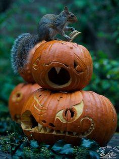 Pumpkins Photographer Max Ellis