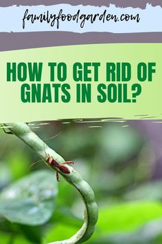 Here are the ways on how to get rid of gnats in soil. Gnats are commonly found in potting soil. If you have recently planted a new raised bed of vegetables or added a new house plant or two to your home then you will most likely encounter gnats. Check this pin for a full guide. #gardening #gnats #fungusgnats How To Get Rid Of Gnats, Beef Recipes, Cooking Recipes, Raised Bed, Potting Soil, Kitchen Recipes, Easy Cooking, Garden Projects, Family Meals