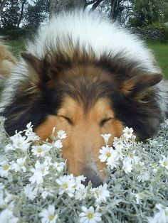 Ahhhh, the nice flowers, their so sweet I'm going to take a nap in them.