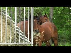 Hay Feeders & Run In Shelter Kits | Klene Pipe Structures