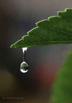 water droplet by Eric Honig Photography