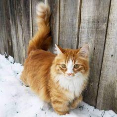 LOST CAT: 03/10/2018 - Caldwell, Idaho, ID, United States. Ref#: L42328 - #CritterAlert #LostPet #LostCat #MissingCat
