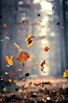 Happy Fall Ya'll!! #tsgpalmbeach
