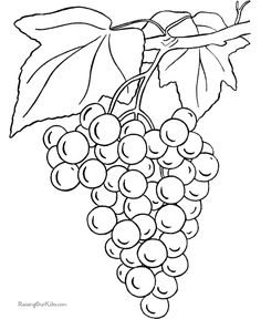 Fresh Coloring Pages Grapes Free - Coloring Pages For Free Food Coloring Pages, Printable Coloring Pages, Coloring Pages For Kids, Free Coloring, Coloring Books, Embroidery Designs, Hand Embroidery, Gravure Illustration, Grape Color
