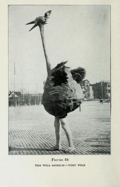 The Wild Ostrich - Very wild. How To Put On an Amateur Circus - Fred A. Hacker & Prescott W. Ames- Chicago: T.S. Denison & Co., 1923.