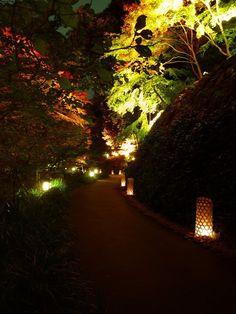 徳川園の日本庭園に並んだ「たんころりん」は、庭園のライトアップと実に良くマッチしていて、幻想的なコラボレーション空間を創り出していました。