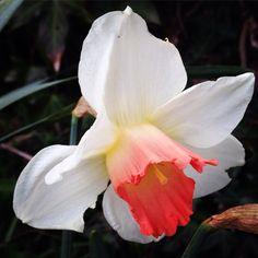 Encore et encore des fleurs, vive le #printemps ! #coaching #spring #orange #white #yellow #bienetre #coach #personnality #image #photographer #blogger #blog #instaflowers #saison #look #lifestyle #businesswoman #colorimetrie #ligne #forme #motivation