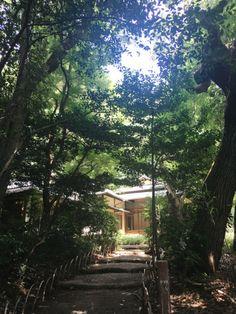 Hallo Japan, ich bins (Japan #1) - Blogbeitrag auf FOTG