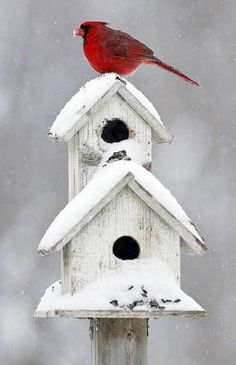 White snowy bird house and red cardinal