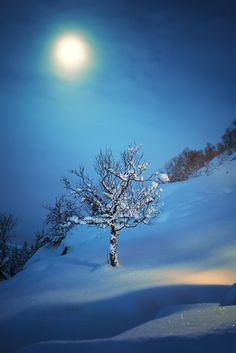 a winter night, moon