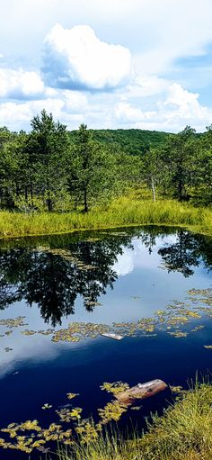 Mohos Peat Bog is a wonder of volcanic activity in which water, wildlife, and some wood steps aret the recipe for an amazing experience. Stories For Kids, Great Stories, Wooden Path, Water Experiments, Walk On Water, Carnivorous Plants, Pine Forest, Small Plants, Buy Tickets