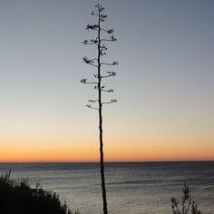 #Photo by @eduherv #ametllademar #ametllamar #terresdelebre #tarragona #catalunya #catalogne #cataluña #catalonia #pesca #fishing #pêche #platja #playa #plage #beach #estiu #verano #été #summer #sun #vacances #vacaciones #holiday #traveling #viajes #travel #visit #eatheword #vamosdeviaje #voyage #escapadas #experiences #traveller #food #gastronomia #gastronomy # happyholidays #mediterrani #mediterraneo #mediterranean #visiting #vacation #trip #tourism #tourist #reservadelabiosfera