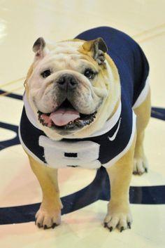 Butler University Mascot!