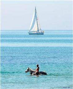 Caribbean cruise....horse style :)