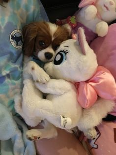 Snuggling with Marie Cavalier King Charles Dog, King Charles Spaniel, Pet Dogs, Dog Cat, Pets, Super Cute Puppies, Spaniel Puppies, Teacup Puppies, Beautiful Dogs