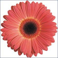 flowers online auckland new zealand