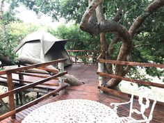 We now sleep 58 people between our 4 accommodation options suiting all budgets! Black Leopard Camp, sleeps 18 in 4 star luxury Black Eagle View, sleeps 8 in a luxurious canvas house (also dog friendly) Buffalo Thorn Camp, sleeps up to 14 in rustic canvas Black Eagle, Dome Tent, Camping Places, Mattresses, Treehouse, Campsite, Outdoor Camping, Tents, Dog Friends