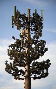 """Pine Tree. Carlsbad, CA. 2011. Digital C-Print, 44"""" x 28"""" - Zorawar Sidhu"""
