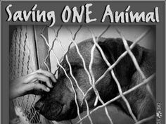 Help support Ohana Paws Rescue- Saving Pups From Death Row.
