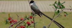 Pássaros no jardim - APRENDA EM 04 PASSOS A TER UM JARDIM REPLETO DE PÁSSAROS E HARMONIA Pássaros são atraídos por flores, frutas e água disponível. Ter pássaros no nosso lar deixa o ambiente mais harmonioso e relaxante. Um jardim ou quintal compássarostraz uma sensação de alegria e bem-estar que melhora o stress ... - http://www.lojaflamengo.com/ecoblog/2016/10/07/passaros-no-jardim/