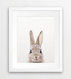 Rabbit Print Woodland Nursery Decor Rabbit Photo Bunny by synplus