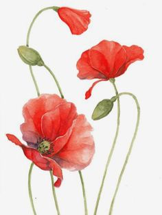 ❤️ fav Source by Watercolor Poppies, Watercolor Cards, Watercolor Landscape, Abstract Watercolor, Watercolour Painting, Watercolor Portraits, Watercolor Artists, Abstract Paintings, Watercolors
