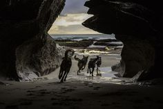 Through_the_cave beach dogs