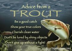 Be a Good Catch- Advice from a Trout Magnet. Your True Nature New Quotes, Family Quotes, Wisdom Quotes, Funny Quotes, Inspirational Quotes, Animal Spirit Guides, Animal Medicine, Life Changing Quotes, True Nature