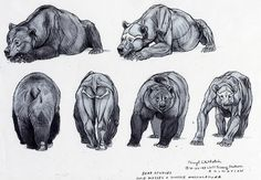 (5) Likes | fucktonofanatomyreferences: A superb fuck-ton of bear references. If you're doing animation or something pertaining to bears walking, for the love of mud, watch some clips before you start. The forepaws move a bit differently from other animals. And regardless of how fat and squishy they may appear, they. Run. Fast. They are coordinated and strong. Like I said, watch some clips to get a better idea. [From various sources]