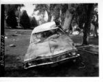 A photograph of a crushed car up against a tree in Canyon Lake Park.