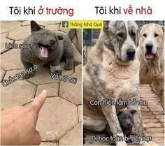 Photo Processing, Emoji, Funny Animals, Avatar, Labrador Retriever, Funny Pictures, Funny Memes, Anime, Dogs