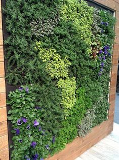 Vetical Gardens A vertical garden can be developed inexpensively with yard netting and a few of your favorite climbing plants. Do It Yourself Projects - Develop a Do It Yourself Outdoor Living Wall Surface Vertical Yard Planter Balcony Herb Gardens, Wall Gardens, Hanging Gardens, Hanging Plants, Island Moos, Vertical Garden Wall, Vertical Planter, Succulent Wall, Backyard Garden Design
