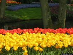 Hình ảnh sắc hoa đua nhau khoe sắc giữa mùa xuân ~ Ảnh Đẹp Du Lịch