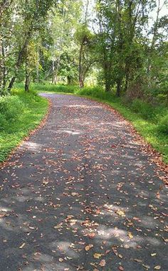 Powhatan Creek Trail in Williamsburg, Va -  a beautiful trail to hike, walk, or take a ride on a bicycle!