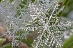 magnified snowflake