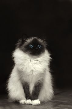 I hate cats...but I would love this precious thing.