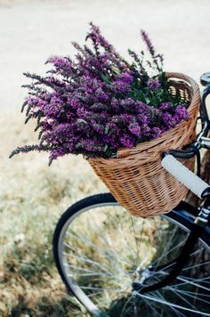 Explore amazing art and photography and share your own visual inspiration! French Lavender, Lavender Blue, Lavender Fields, Lavander, Lavender Aesthetic, Flower Aesthetic, Lilac Flowers, Beautiful Flowers, Bike Planter
