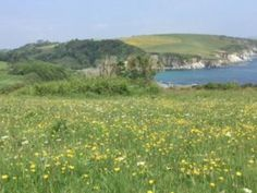 The Book Trail Pengelly's Daughter (Cornish Saga 1) - The Book Trail