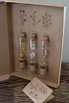 Nieuw bij Brocante Bloemen! Brievenbus cadeautjes die u kunt personaliseren. Wie gaat u verrassen met dit leuke cadeau?🌸  Ieder pakketje bestaat uit een aantal glazen buisjes met droogbloemen. Ieder buisje heeft een eigen naamlabel en kurk. Ze zijn bevestigd op een prent van pentekeningen met een bijpassend kaartje waarop u een persoonlijke groet kunt overbrengen. Kijk op brocantebloemen.nl voor alle combinaties! Witch Aesthetic, Flower Aesthetic, Aesthetic Vintage, Flower Crafts, Flower Art, Diy And Crafts, Arts And Crafts, Deco Nature, Glass Bottle Crafts