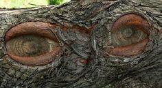 oeil de bois