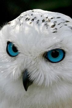 Owls signify 'Enlightenment' I wish my eyes were that piercingly bright blue!