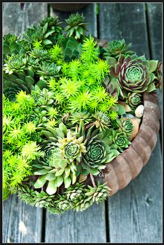 succulents - fill flower beds and plants with low care succulents, grow tight to suppress weeds, lots of contrast and color