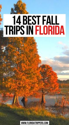 14 Best Fall Trips in Florida   Epic Fall Trips in Florida   14 Best Places for Fall in Florida   Fall in Florida 14 Fun Things to do! florida fall   fall in florida   fall in florida things to do   fall foliage in florida   fall colors in florida   florida fall colors   florida travel   best places to see fall in florida   #fallfoliage #fall #florida #usa #travel