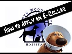 How to Apply an E-collar to your Pet