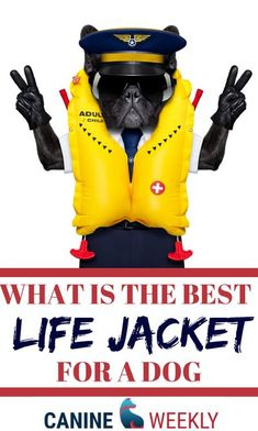 Do you and your dog love water sports? We've found seven of the best dog life jackets and put together all the information you need to choose the right dog life vest for your pup and keep everybody safe in the water. Dog life jackets will keep your dog safe while out on the water. #DogLifeJacket #WaterDog #DogLove Best Dog Toys, Best Dogs, Dog Life Vest, Hypoallergenic Dog Breed, Top Dog Breeds, Dog Organization, Dog Nutrition, Nutrition Guide, Beautiful Dog Breeds